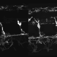 Super Resolution Ghosts: ND Engineer discovers new imaging methods for cell research
